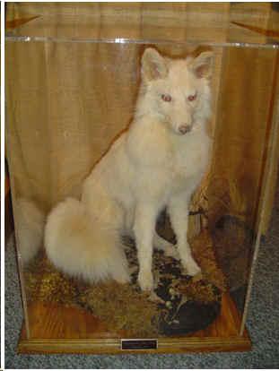 Albino Animal 1