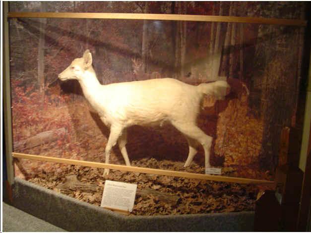 Albino Animal 2